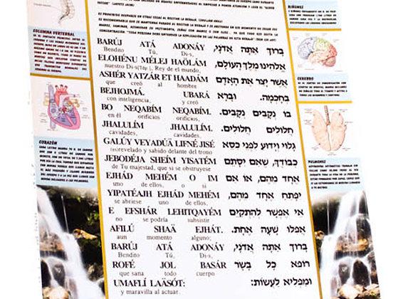 Asher Yatzar plastificado