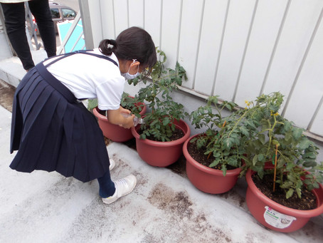 野菜の成長記録