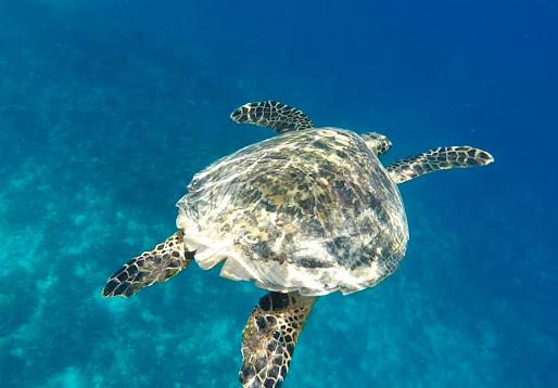 Nadar con Tortugas en GILI