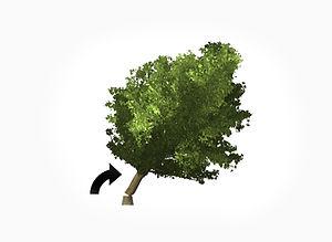 Trädfällning.jpg