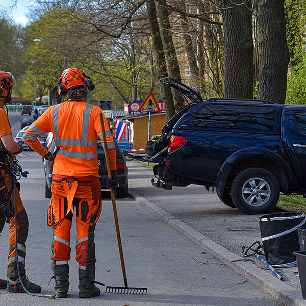 Arborist jobbar i Solna