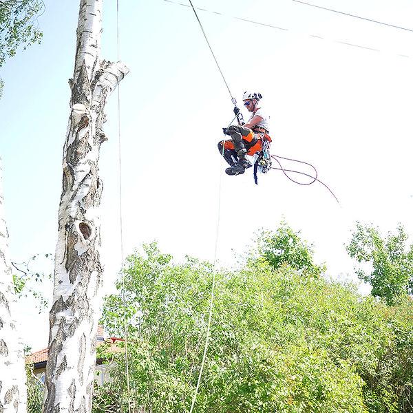 Trädfällning och klättrar i träd