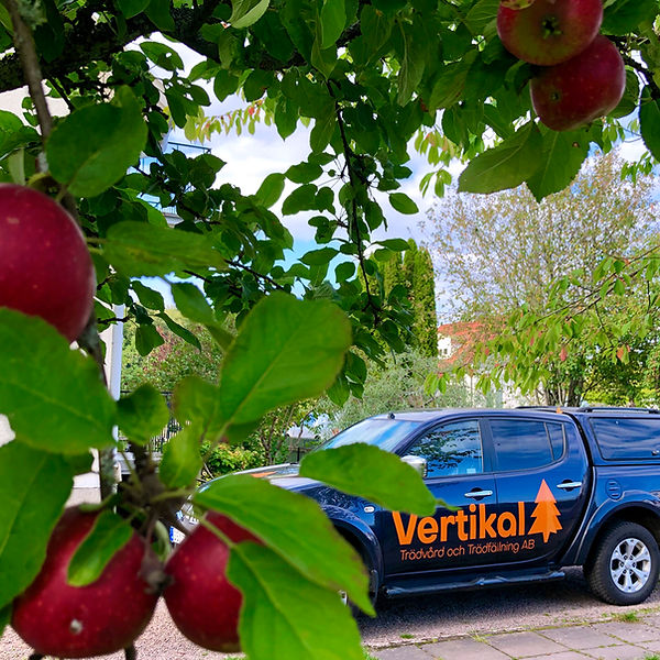Beskärning äppelträd Solna Hjo