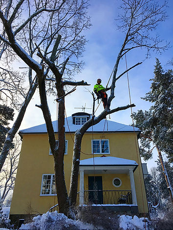 Arborist jobbar vintertid