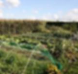 Jardin-sol.bmp