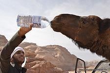 Wadi Rum Ride a Camel