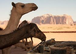 2 Day 1 Night Camel Trekking