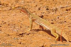 wildlife63.jpg