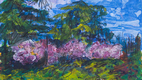 Cherry Blossom, Lauriston Castle