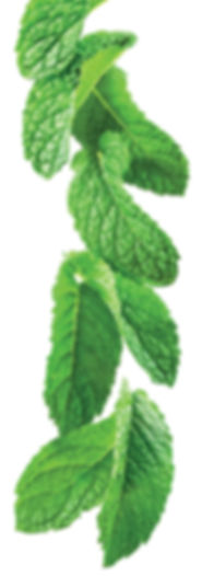 12.green-mint-image.jpg