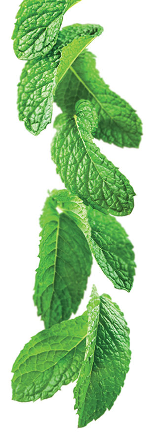 12.green-mint-image.jpg