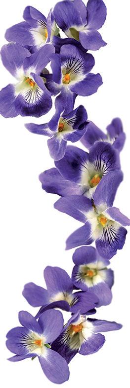 33.violet-image.jpg