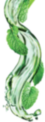 9.mojito-mint-image.jpg