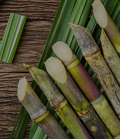 sugarcane-5388614_1920_edited.jpg