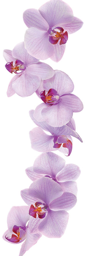 26.orchid-image.jpg