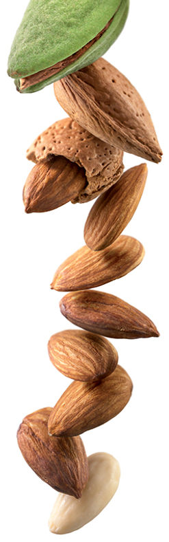 23.almond-image.jpg