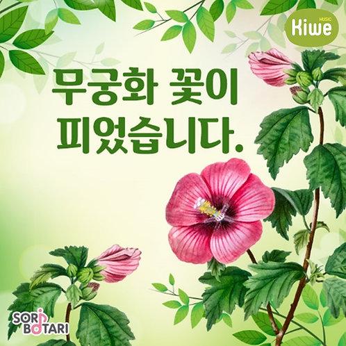무궁화 꽃이 피었습니다(1년)