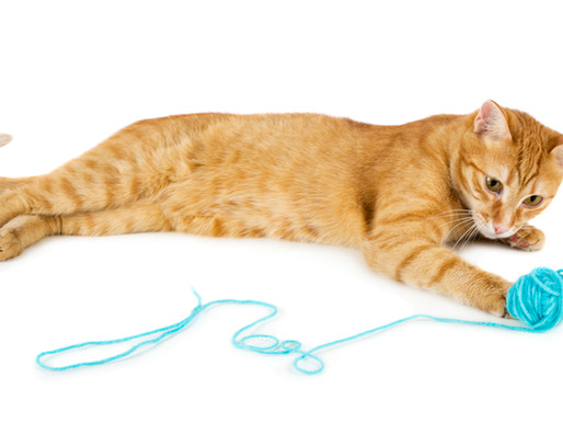 Common Myths About Dry Cat Food