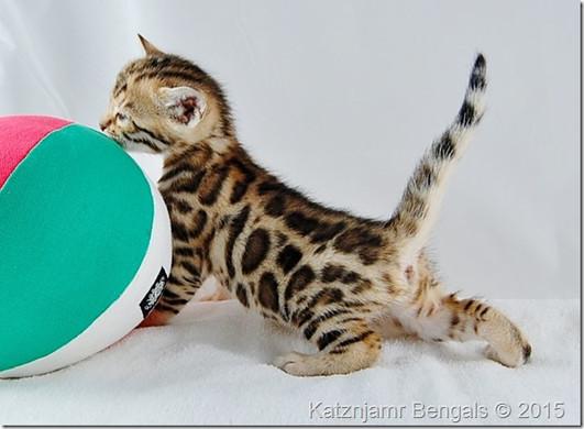 A Katznjamr Kitten