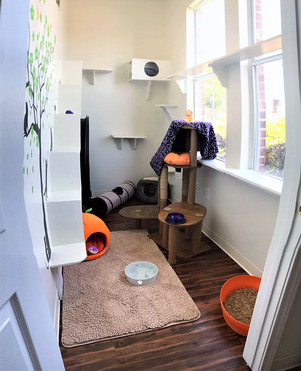 Whiskers Luxury Cat Boarding Jungle Gym Suite