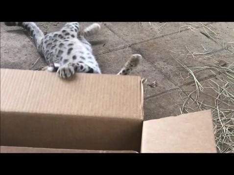 The New Box!
