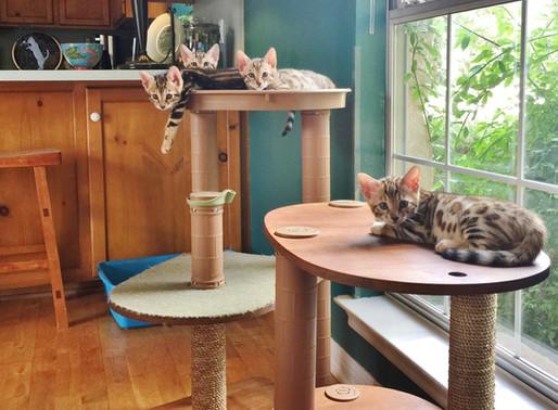 How Do I Become a Cat Breeder?