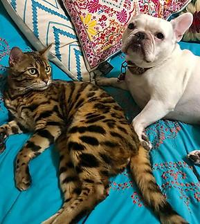 Katznjamr Mr. Miagi & Friend