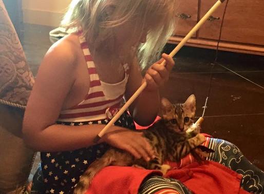 Feeding Your Cat: Know the Basics of Feline Nutrition