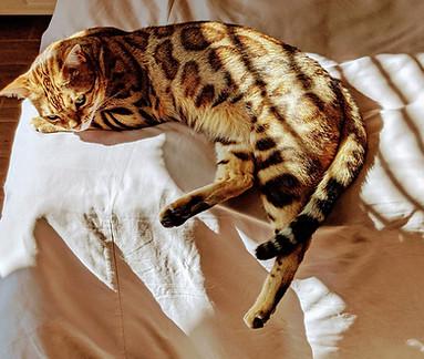 Katznjamr Cleo