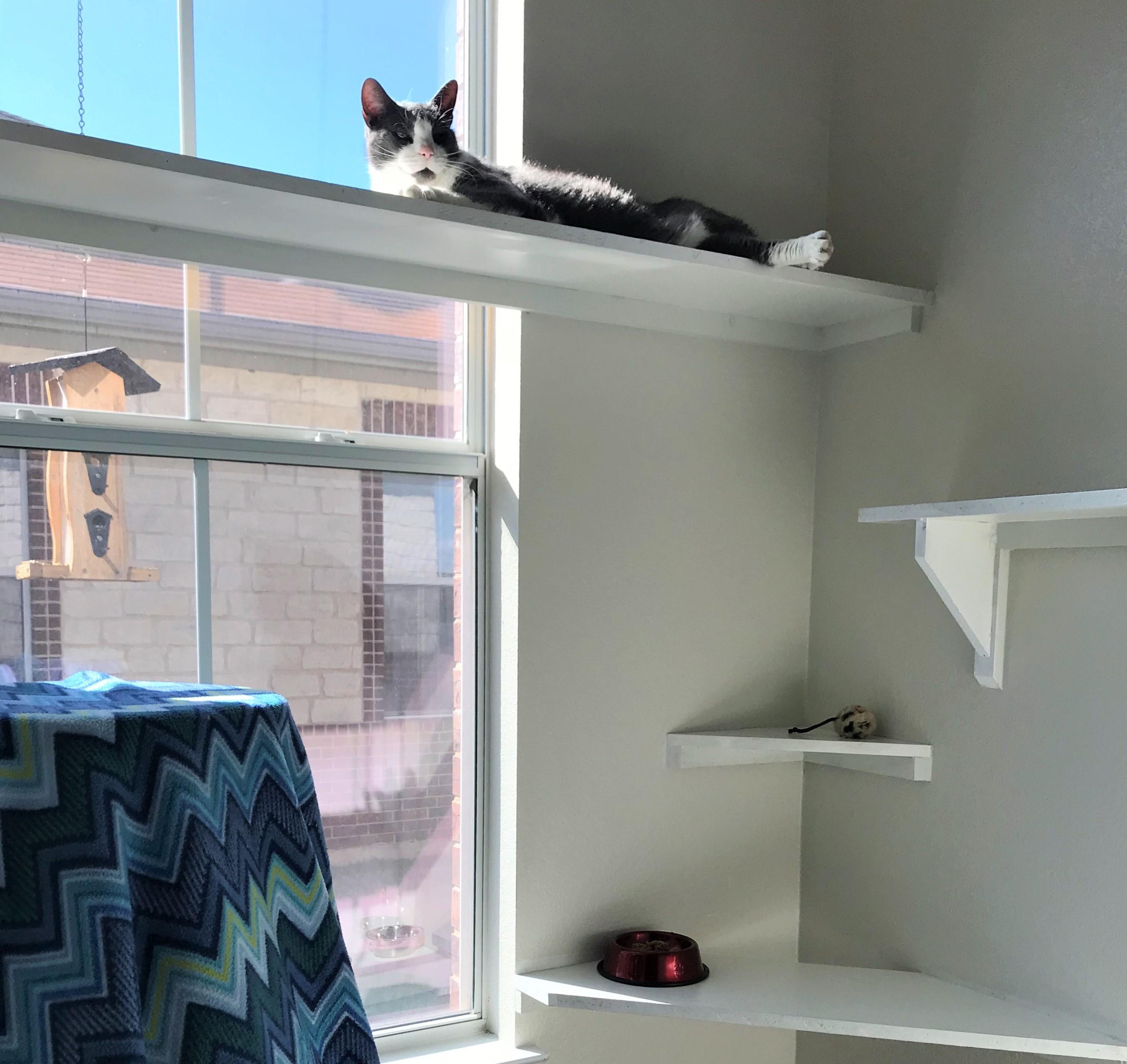 Whiskers Cat Boarding - Walk In Suites