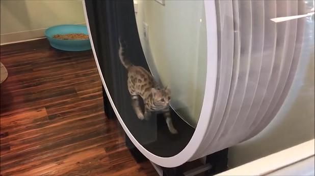 Bengals Love Cat Wheels