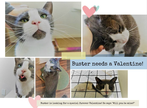 Update! Buster Found a Family!