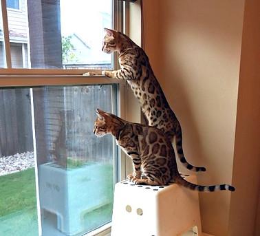 Katznjamr Sisters Birdwatching