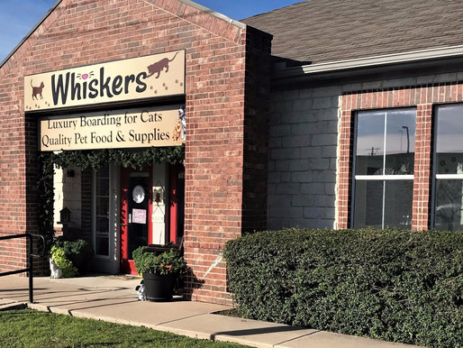 Whiskers Luxury Cat Boarding Opens!