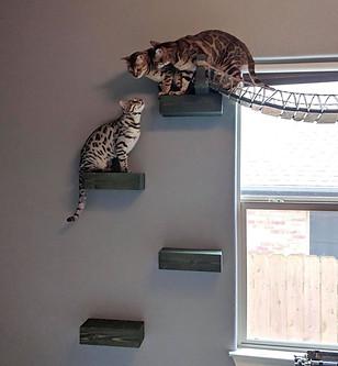 Climbing Shelves & Ladder