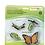 Thumbnail: Ciclo de vida de la Mariposa