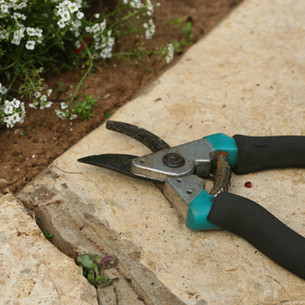 Why Pruning Your Shrubs is Important