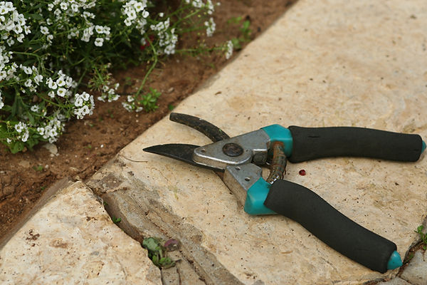 Садоводство ножницы
