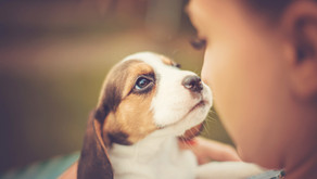 Do our pets go to heaven? Will we see them again?