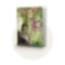-betty_eadie_ripple_effect_bookcover.png
