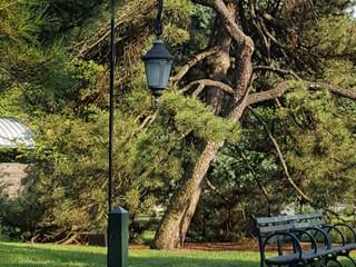 Прогулка в Ботаническом Саду в Бронксе. Часть 2.