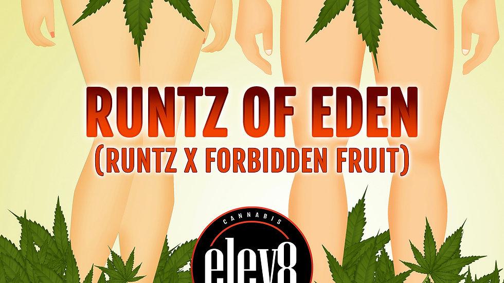 Runtz of Eden - Feminized - 6pk