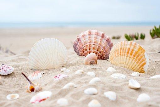 plage, nature