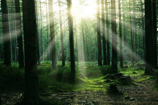 respirer, nature