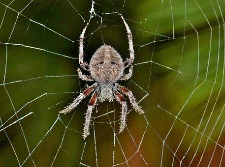 spider-1606870__340