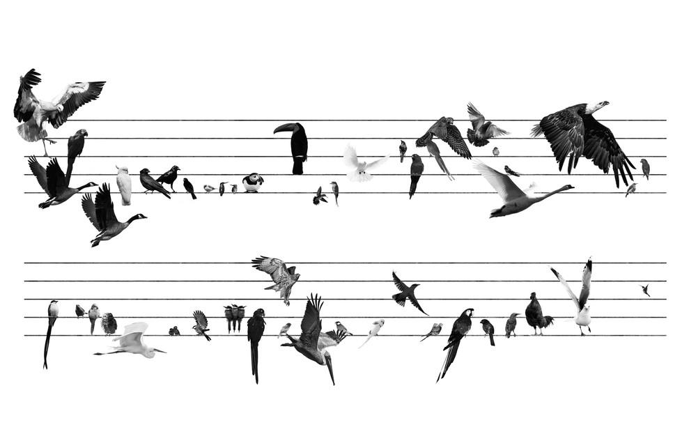 Birdstagram