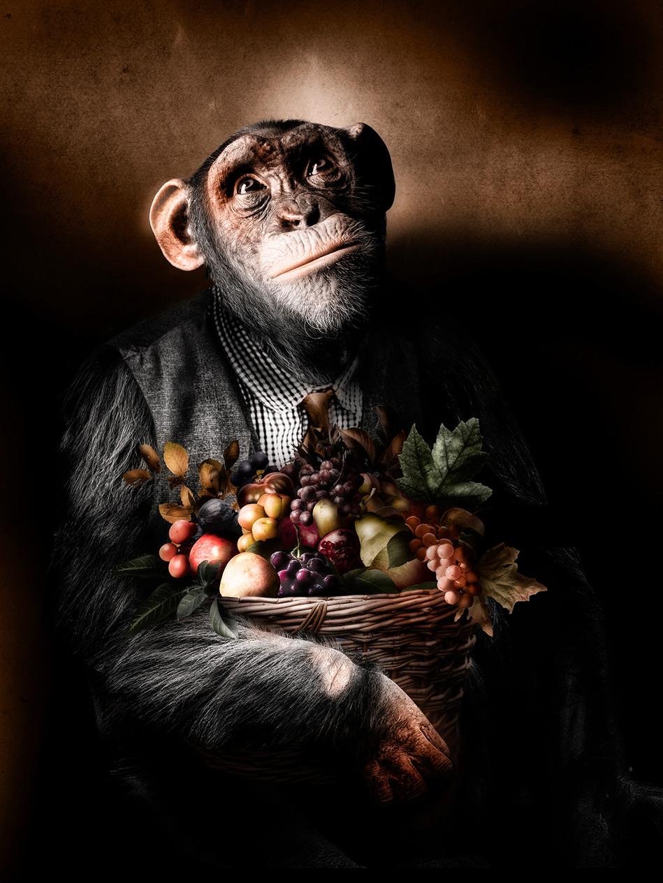 Scimmia con canestro di frutta
