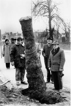 Cannon Excavation