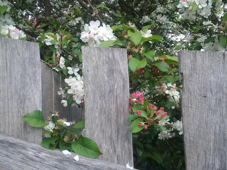 Seasonal Allergies & Spring Wellness