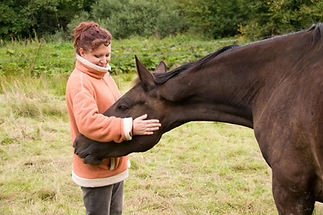 dreamstime_m_16250596-young-woman-&-hors